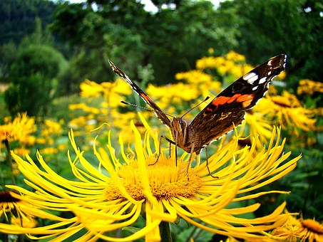magnify-butterfly-1282344__340