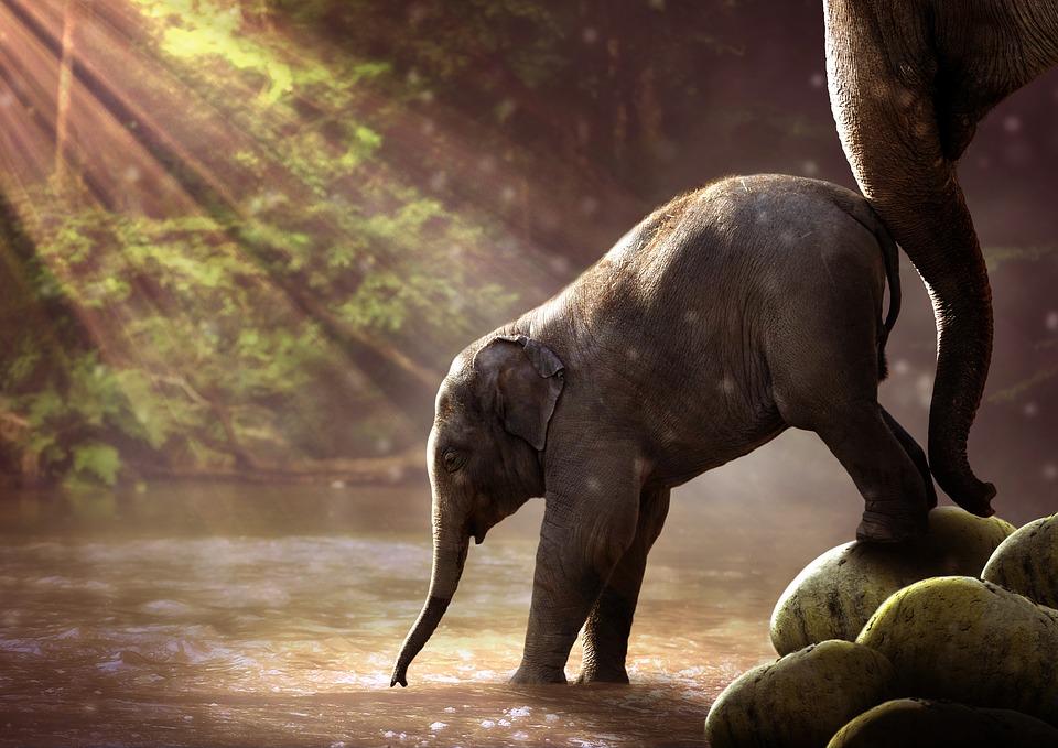 elephant-2380009_960_720